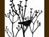 242-lilacs-silouhette