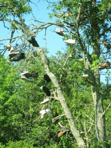 tree, shoes, shoes hanging in tree,