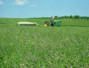 haybine, alfalfa hay, cutting hay, green tractor