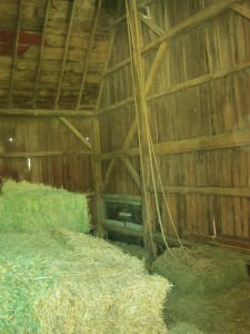 Layers of hay are starting to form it the barn as it comes off of the elevator, hay bales, barn, inside barn, hay barn,