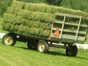 Load of alfalfa hay, hay bales, small square hay bales, hay wagon,