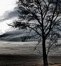 tree, cloudy sky,