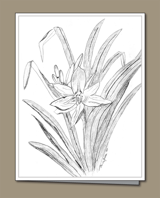 pencil drawing, day lily pencil drawing, pencil drawing of day lily,