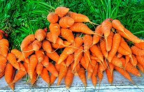 carrots, bunches of carrots, carrot greens,