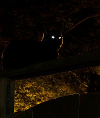 dark night, cat eyes, relecting cat eyes, black cat,