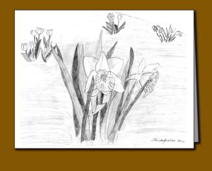 pencil sketch, daffodils, tulips,