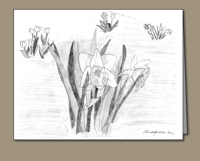 daffodils, tulips, pencil drawing of daffodils, spring flowers,