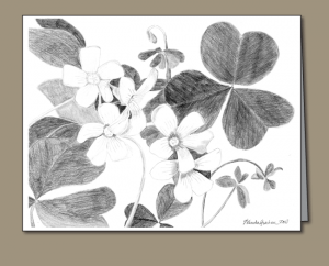 shamrock, shamrock flowers, Pencil drawing of shamrock with flowers,