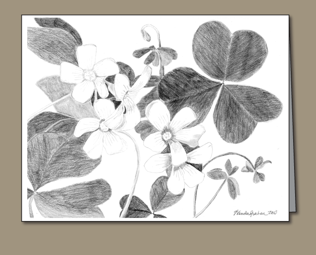 shamrock, shamrock flowers, Pencil drawing of shamrock with flowers, Shamrock card,
