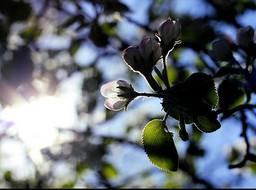 Sunshine, blossoms, springtime,