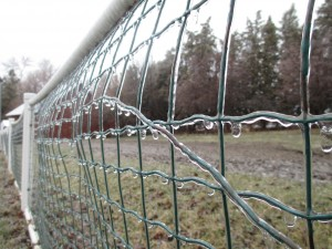 fence, wire fence, ice, ice-coated fence,