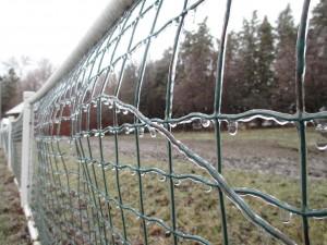 fence, wire fence, ice, ice-coated fence,