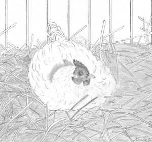 Hen in straw, pencil sketch, hen nest, nest, nesting, white hen,