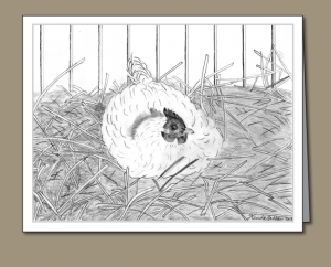 setting hen, hen, white hen, hen in nest, nest, straw,