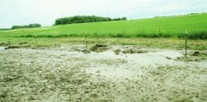 green field, flooded barn yard, barnyard, farm, rainy weather,