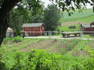 garden, PVC fence, hay wagon,