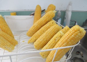 corn, sweet corn, corn on the cob, draining sweet corn,