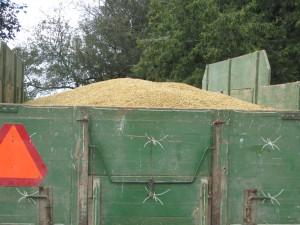 Oats loaded in convertible wagon; with sides off  and back board on it is a hay wagon
