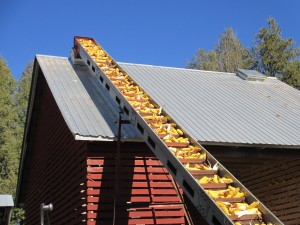 Ear Corn, Elevator, Corn Crib, Field corn, corn elevator,