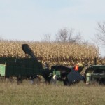 Corn Picking – A Harvest