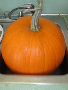 pumpkin, pumpkin in sink,