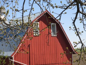 Red barn, buds on tree, Spring, signs of spring,