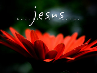 Red flower, Jesus, Beautiful Savior