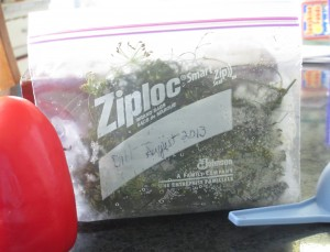 dill, frozen dill, freezer bag,