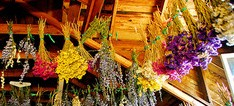 drying flowers,