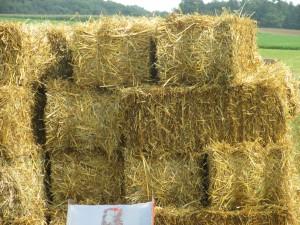 straw, straw bales,