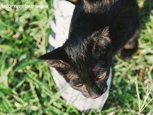 Cat, cat rubbing by shoe,