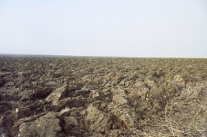 plowed earth,
