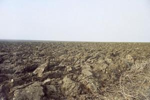 plowed earth,