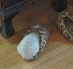 kitten asleep in bedroom slipper, slipper, lady's slipper, kitten napping