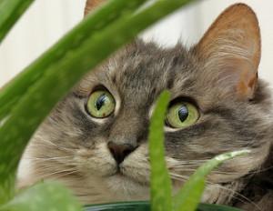 cat face in garden