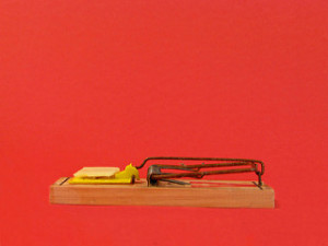Mouse trap, mouse trap with cheese, clean mouse trap,
