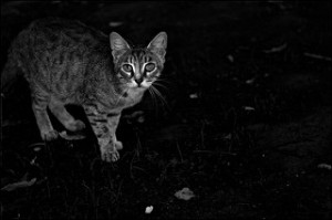 cat in dark shed