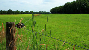 electric fence, green pasture,